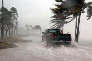 hurricane wind in palm trees