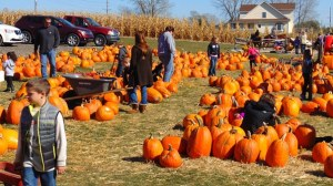 kids walking in pumpkin patch